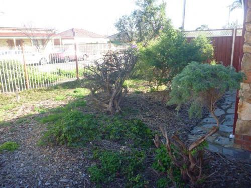 landscaping-17
